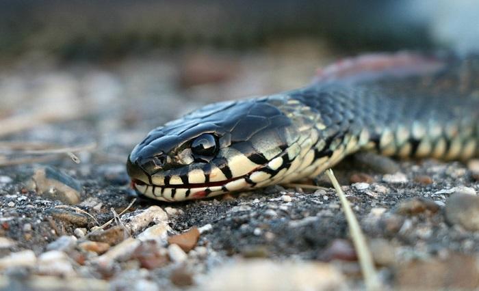 Mơ bị rắn cắn đánh con gì?