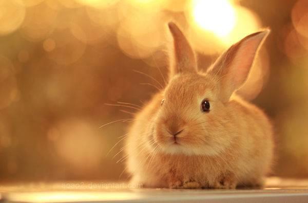 Chiêm bao mơ thấy thỏ báo hiệu điều gì? Bật mí bí ẩn đáng sợ