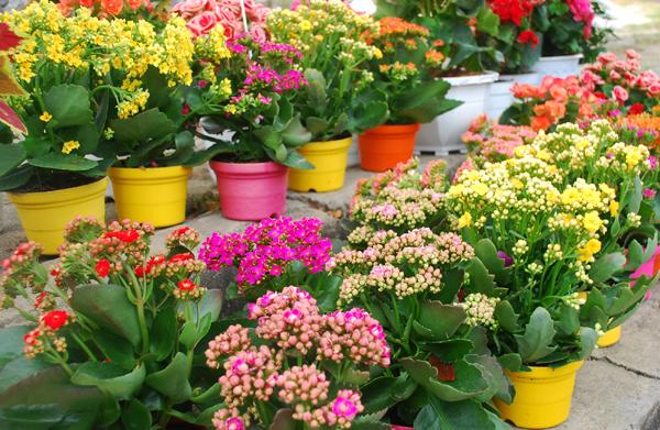 Những giấc mơ thấy việc trồng hoa là điềm báo gì ?