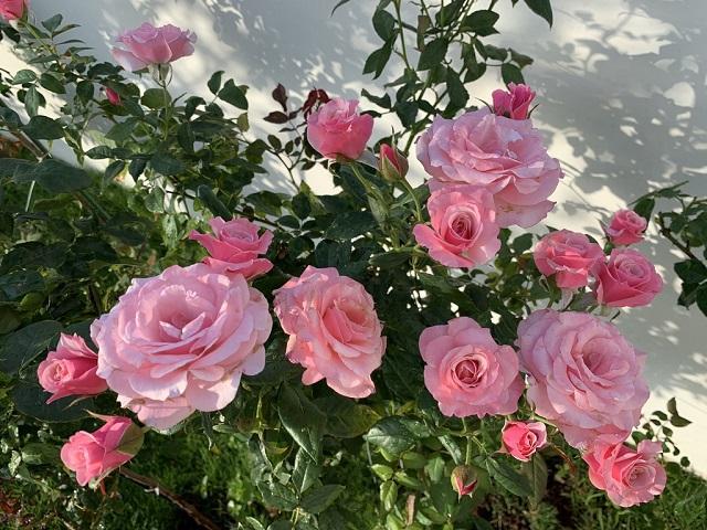 Nằm mơ thấy hoa có điềm báo như thế nào, đánh con số mấy?
