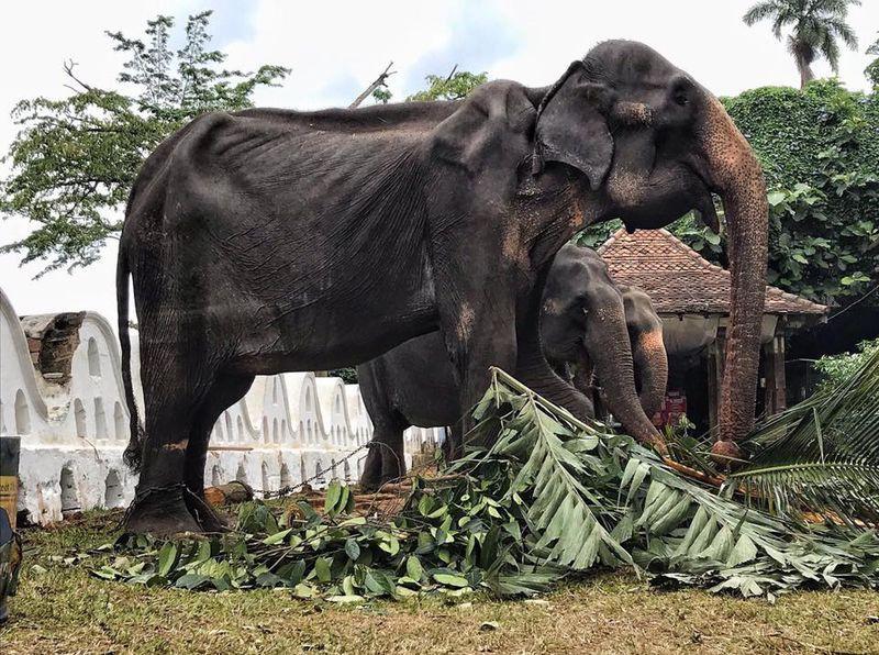 mơ thấy voi bị cháy